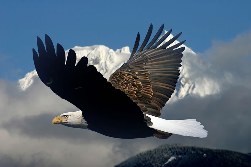 Whats In A Symbol By Deleola Daramola The Eagle Online