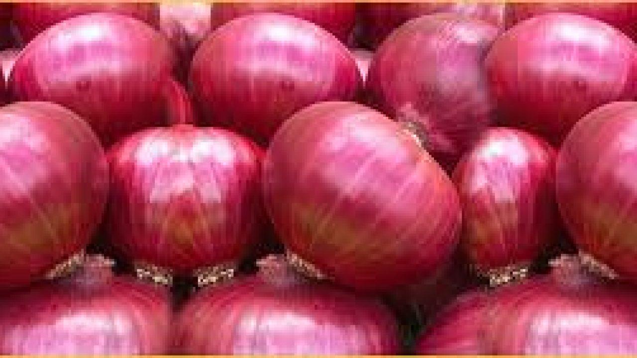 Onionscan Kali