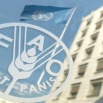fao-food-and-agriculture-organisation
