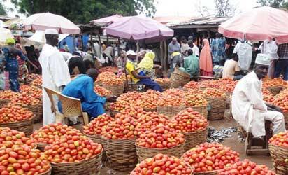 Tomatoes-market.jpg
