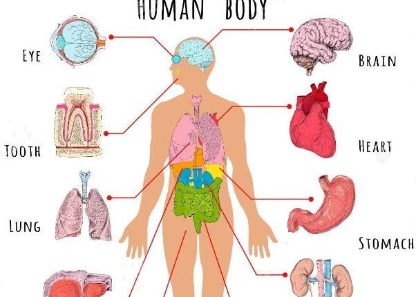 Cardiologist advocates donation of human organs to save lives – The ...