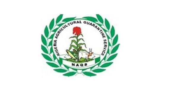 NAQS confiscates N3 million perishable exports rejected by UK – The